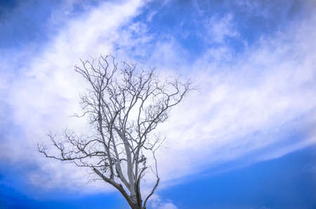 Dead tree with the sky