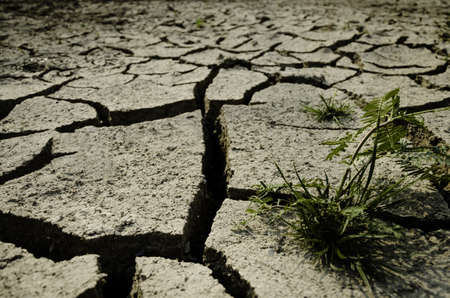 dry land with plant
