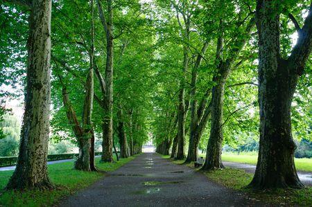 Avenue auf die Neckerinsel - Tübingen, Deutschland Lizenzfreie Bilder
