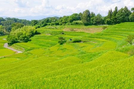 Yokone rice fields in Iida, Nagano, Japan Standard-Bild
