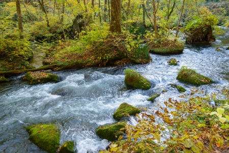 Autumn of Oirase Gorge in Aomori Pref  Stock Photo - 17595395