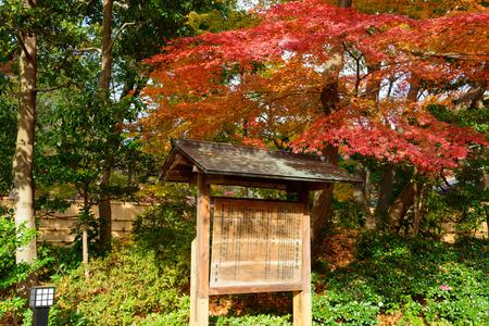 東京で秋に小石川後楽園