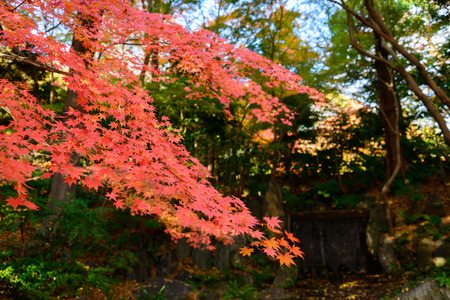 Koishikawa Korakuen Garten im Herbst in Tokio