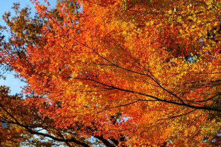 東京で秋の小石川後楽園