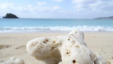 沖縄のビーチで珊瑚をクローズ アップ 写真素材 - 56871055