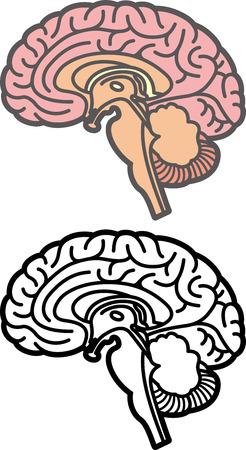 척수: 뇌