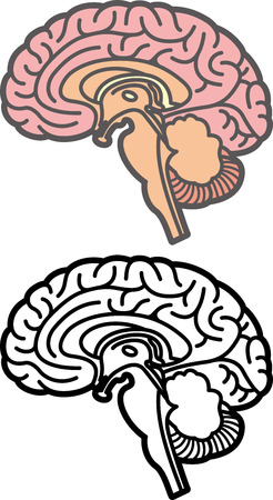 sensations: Brain Illustration