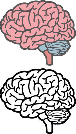 Brain  イラスト・ベクター素材