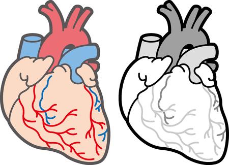 atrium: heart