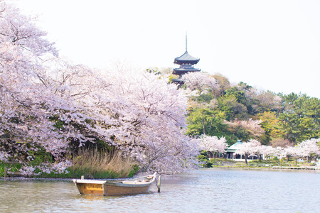 Cherry blossoms, the five-story pagoda and the boat