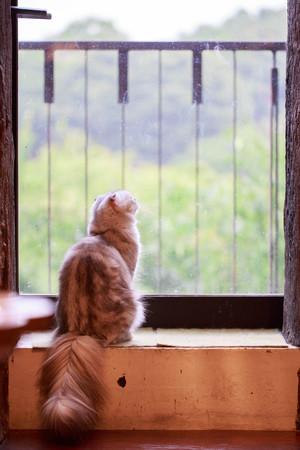 Cat in the window 写真素材