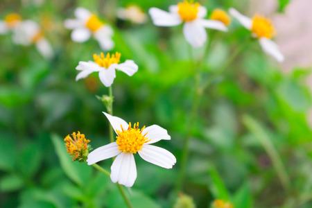 small flower: White small flower