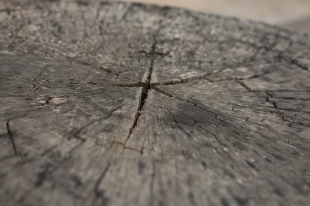 fissure: wood crack