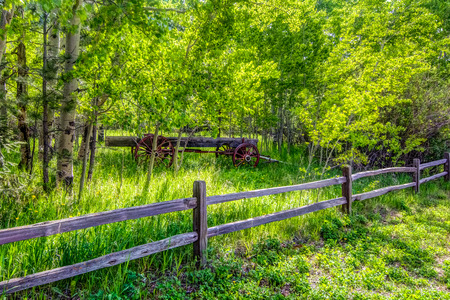 aspen grove: Antique wagon in Aspen grove with fence