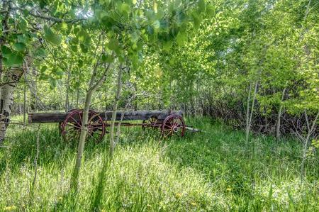 arboleda: carro antiguo en un campo de Aspen
