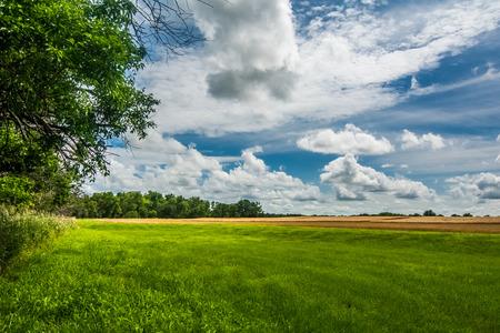 Met gras begroeide tuin met bomen en tarwe veld