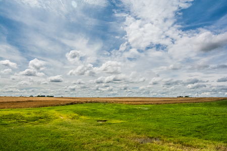 Grassy yard and wheat field with clouds