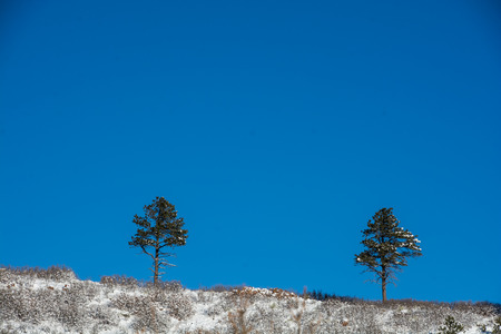 herman: 2 trees on a snowy hill