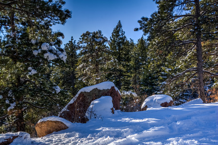 Snow covered pine trees and rocks Stock Photo