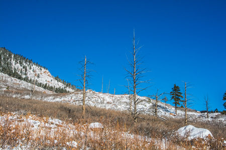 herman: Burnt trees on snowy mountain