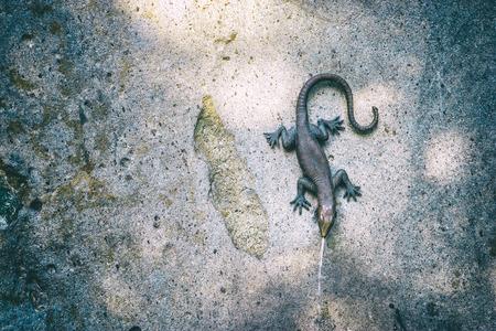 Lizard statue fountain on the rock wall Reklamní fotografie