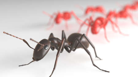 ant leading other ants in isolated area.