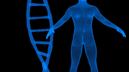 Blue dna and human wireframe hologram 3d render Stock Photo