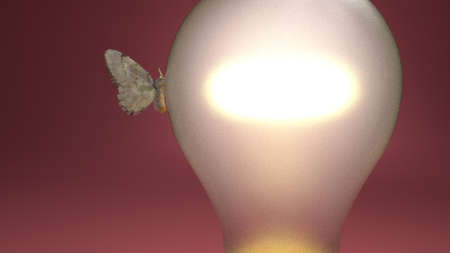 moth: moth to bul in red environment. Stock Photo