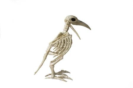 Skeleton Raven on a white background.