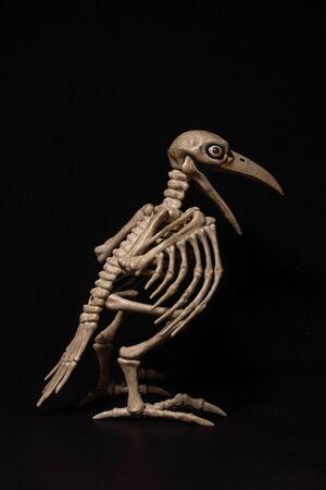 skeleton of a raven with human eyes on a black background Standard-Bild