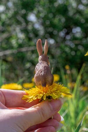 hare sitting on a dandelion