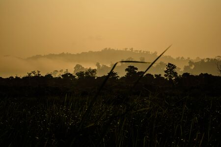 Evergreen rainforest mountains captured during an early foggy morning at Kaziranga National Park, Assam, Northeast, India.