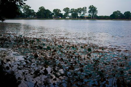 Sibsagar Lake covered by lotus leaf, Admire the Lovely Architecture in Sibsagar.