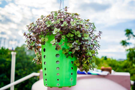 hanging flower pot of plastic, with some phulwari in it, isolated, copy space. A hanging garden. Old pan stand converted in to flowerpot Reklamní fotografie
