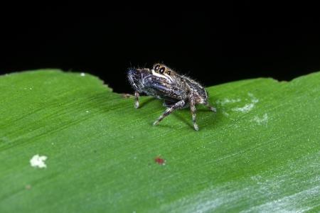 underbrush: Crab Spider