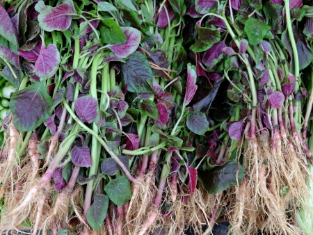 amaranthus: Red spinach