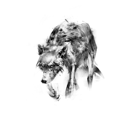 lupus: sketch drawing of a wolf on a white background Stock Photo