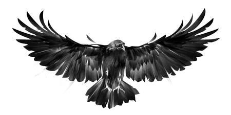 白い背景の前の鳥カラスの孤立した画像