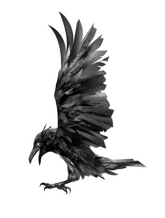 Dibujo cuervo volador. Bosquejo aislado de un pájaro.