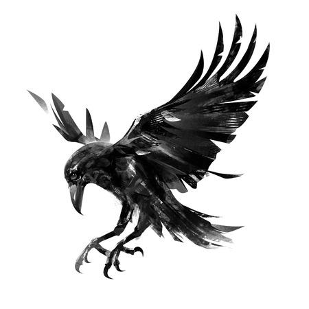 Desenho de corvo voador sobre fundo branco. Esboço isolado de um pássaro.