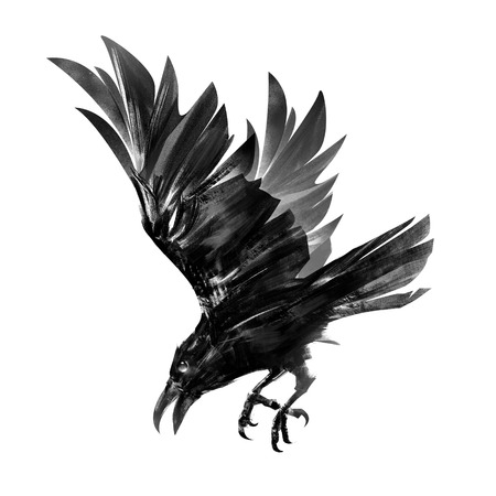 Drawing of a diving crow. Isolated sketch of a bird in flight.