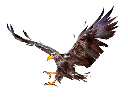 painted a flying eagle on a white background