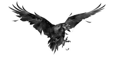 drawn isolated bird a Raven in a fight at the front