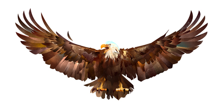 drawn sketch colored eagle on a white background