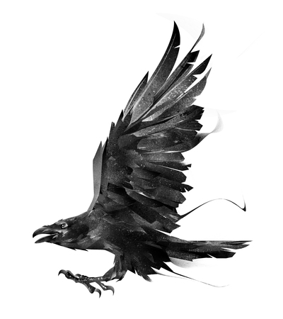 sketch of a flying bird Raven on white background side view
