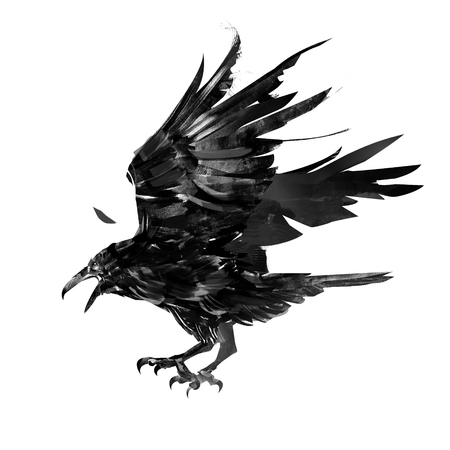 drawn monochrome feathered crow bird isolated