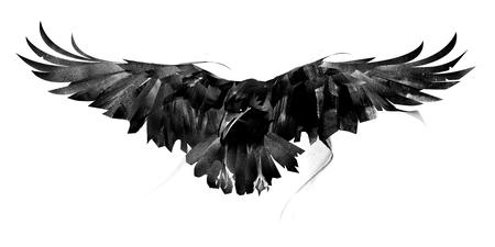 Skizze fliegende Krähe auf weißem Hintergrund vorne
