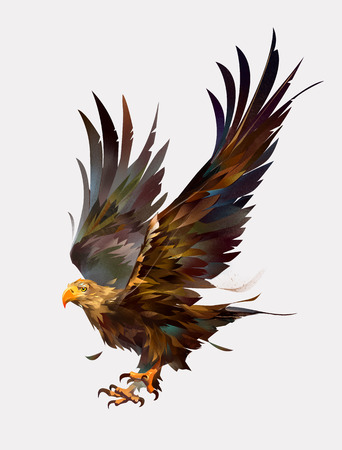 drawn isolated color flying bird eagle