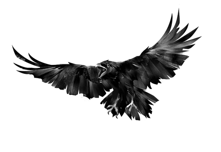 sketch flying bird of a raven on a white background