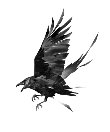 painted flying bird of a raven on a white background